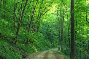 summer-forest